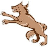 Wolf Wild Dog on Hind Legs Cartoon. Illustration of an angry wild dog wolf on it's hind legs viewed from side done in cartoon style on isolated background Royalty Free Stock Photography