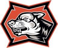 Wolf Wild Dog Retro enojado Foto de archivo