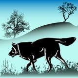 Wolf-Winter Lizenzfreies Stockbild