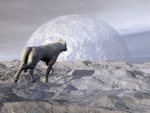Wolf in winter - 3D render Royalty Free Stock Images
