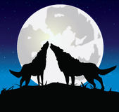 Wolf with a she-wolf. Publish howl on the full moon Stock Image