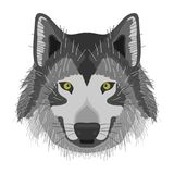 A wolf, a wolf`s head Stock Photography