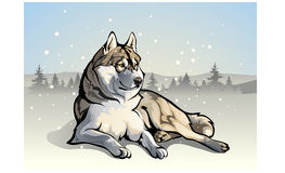 Wolf in the woods. Vector illustration - wolf in the forest Royalty Free Stock Image