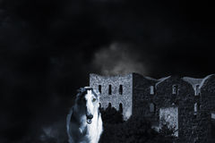 Wolf zoals barzoi gezicht-hond Royalty-vrije Stock Foto's