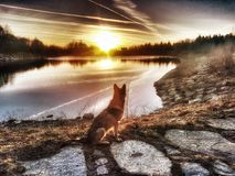 Wolfdog. Sonnenuntergang Dog Lake nature Stock Images