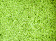 Wolffia globosa or Fresh water Alga, Water Meal, Swamp Algae,green Royalty Free Stock Images