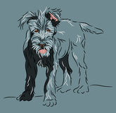 Wolfhound puppy standing pose. Irish wolfhound puppy standing pose drawn in a linear style Royalty Free Stock Images