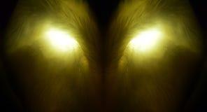 Wolfish dier Stock Afbeeldingen