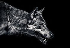 Wolfporträt stockbild