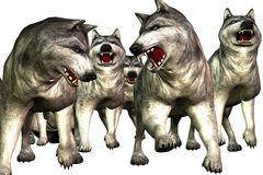 wolfs λύκοι Στοκ Φωτογραφία