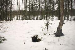 Wolfs вертеп, около болота Стоковые Фотографии RF