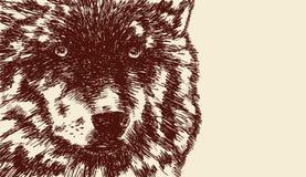 Wolfs (caniswolfszweer) snuit Royalty-vrije Stock Foto