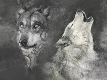 Wolfs, handmade illustration on grey background Royalty Free Stock Image