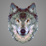 Wolfs laag polyportret Stock Afbeelding
