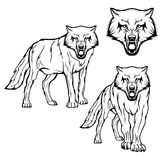Wolfsatz Stockbild