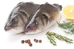 Wolfsbarsch der rohen Fische mit der Zitrone und Petersilie lokalisiert auf weißem backg Stockfotografie