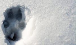 Wolfspur auf dem Schnee stockfoto