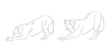 Wolfstribunes, lijnen, vector vector illustratie