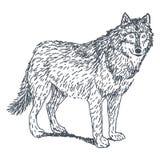 Wolfzeichnung Stockbild