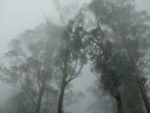 Wolk en bomen stock afbeelding