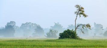 Wolk in het rijstlandbouwbedrijf Stock Foto