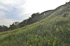 Wolk van insecten stock afbeelding