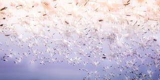 Wolk van vogels Stock Afbeelding