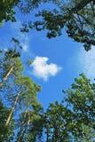 Wolke, Himmel und Bäume Stockfotos