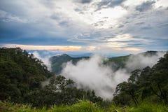 Wolke im Wald Stockfotos