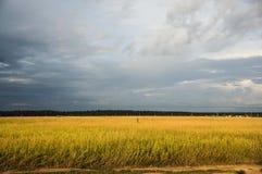 Wolken über dem Feld Stockfoto