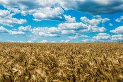 Wolken über dem Feld Stockfotos