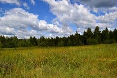 Wolken über dem Rand des Waldes Stockfoto
