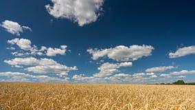Wolken über dem Weizenfeld am sonnigen Tag - 4K Zeitspanne stock footage