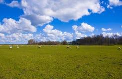 Wolken über einem grünen Feld Stockbilder