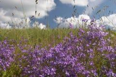 Wolken über grünem Feld und Blumen Stockfotografie