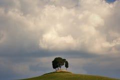 Wolken über Zypressebäumen Stockbilder