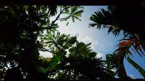 Wolken achter bomen royalty-vrije stock afbeeldingen