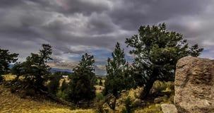 Wolken achter pijnboombomen op Rocky Mountains stock videobeelden