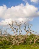 Wolken achter sommige dode bomen en grassen Royalty-vrije Stock Foto's