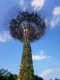 Wolken-Baum-Singapur-Garten durch die Bucht lizenzfreie stockbilder