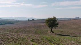 Wolken bewegen sich schnell während eines Zeitversehens 4k über dem Weinberg füllten Landseite von Toskana stock video