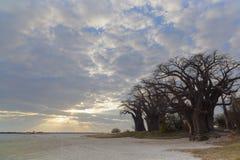 Wolken bij zonsondergang bij Baines-Baobabs stock foto's
