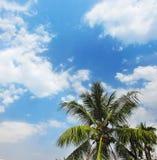 Wolken in blauwe hemel en kokospalmen Stock Afbeelding
