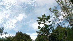 Wolken & de Tijdspanne van de Bomentijd stock videobeelden