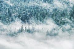Wolken, die über Gebirgswald hängen Lizenzfreie Stockfotografie