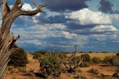 Wolken, die in der Arizona-Wüste aufbauen Lizenzfreies Stockbild