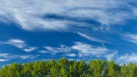 Wolken die zich over treetops bewegen stock video