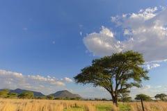 Wolken en acasiabomen Stock Foto's