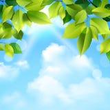 Wolken en Bladerenachtergrond Stock Afbeeldingen