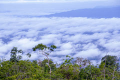Wolken en bomen Royalty-vrije Stock Afbeeldingen